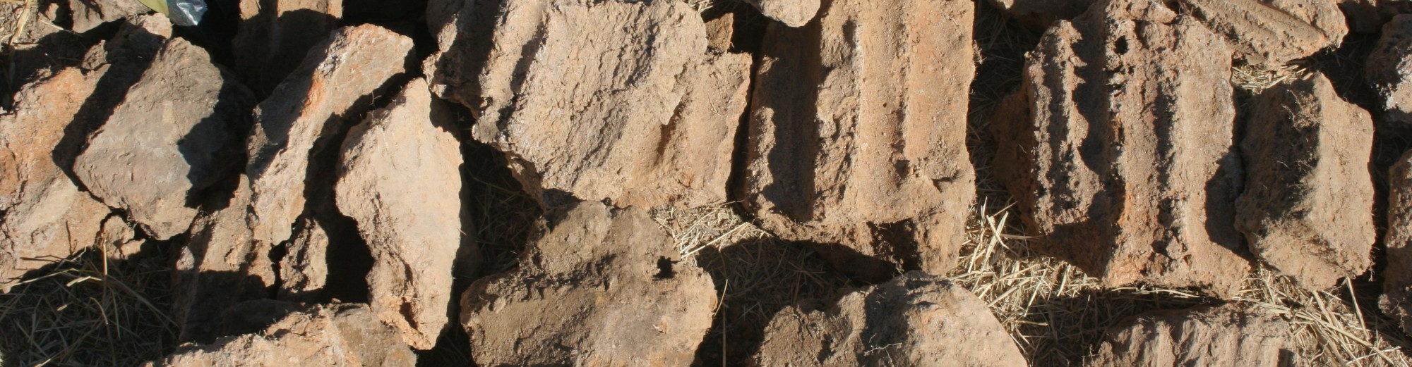 Katedra za prapovijesnu arheologiju